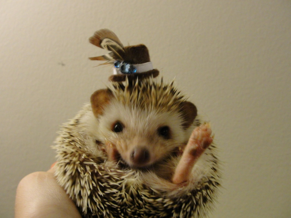 hedgehog with very smart hat