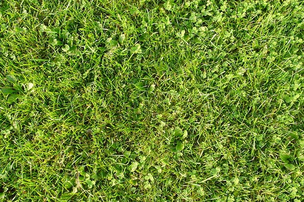 free-high-res-grass-textures