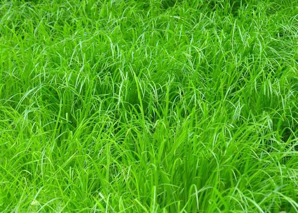 grass-textue-for-free-download