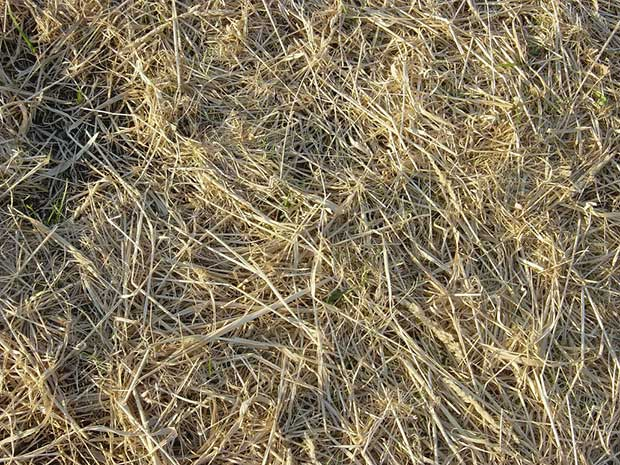 strewn-hay-new-grass-texture