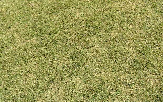 photoshop grass textures