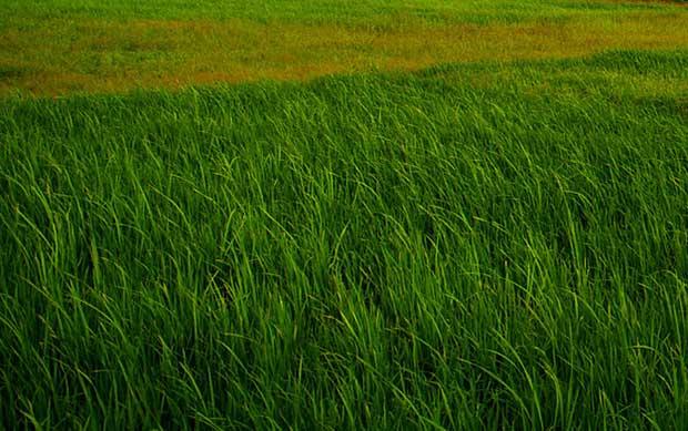 beautiful-grass-texture