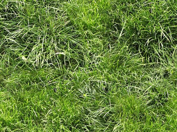 grass-for-ground-seamless