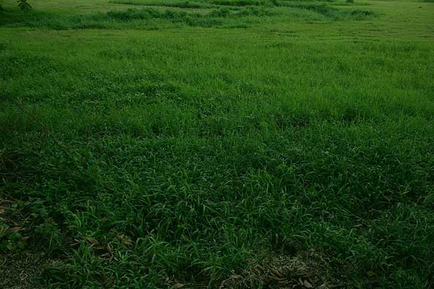 green-grass-texture-photoshop