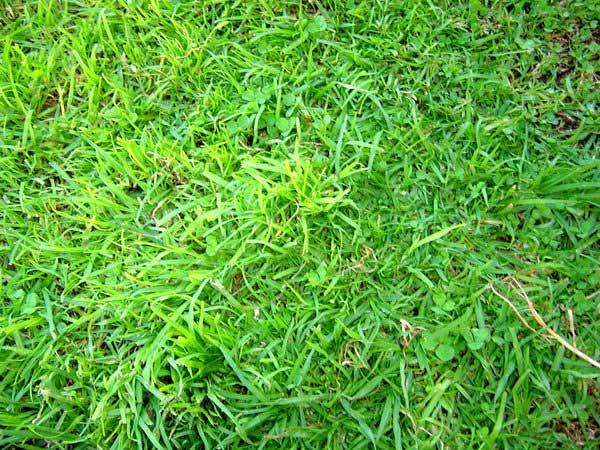 grass-texture-free-photoshop