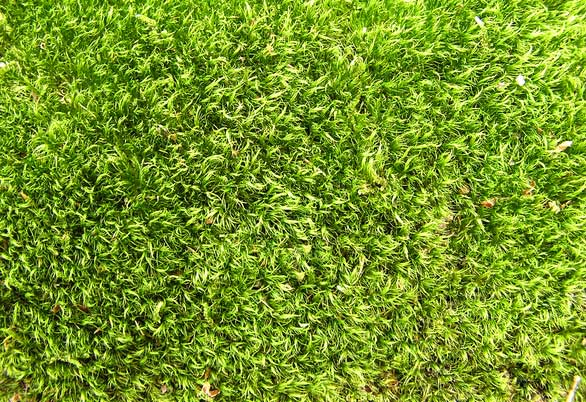 free-grass-texture-download