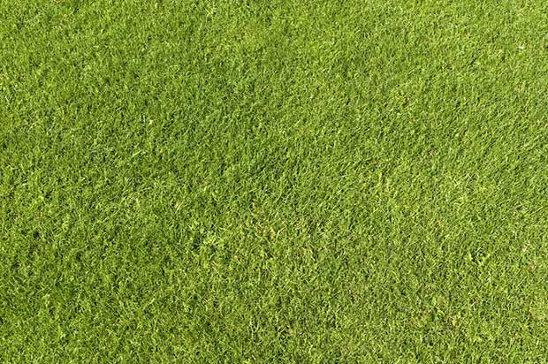 free-high-res-green-grass-texture