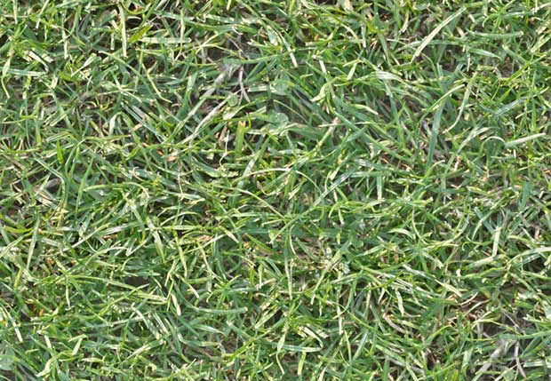 seamless-high-res-grass-texture