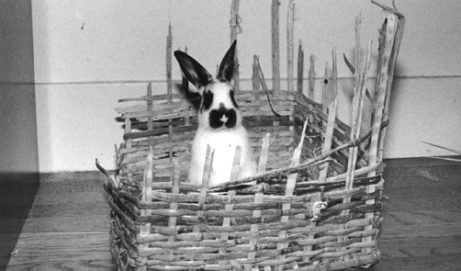 House Rabbits 101: Resources for New Bunny Owners
