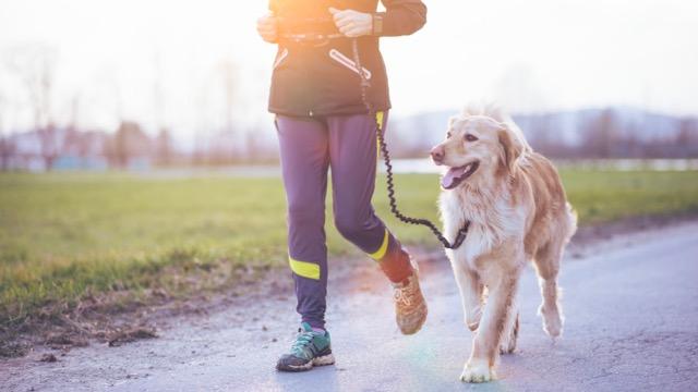 Canicross : Les conseils pour courir avec son chien