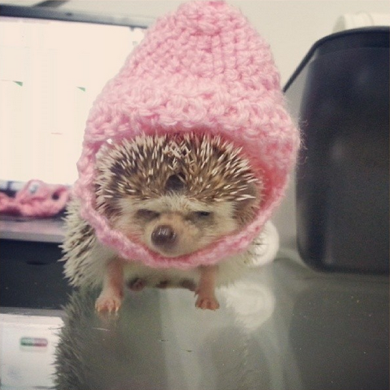 hedgehog with big pink fluffyhat