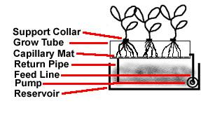 NFT hydroponic method