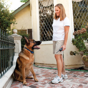 electronic training for puppy and dog