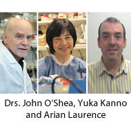 Photos of Drs. Laurence, Kanno and O'Shea.