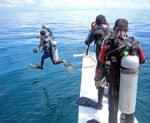 No Gisela, but divers find blasted fish