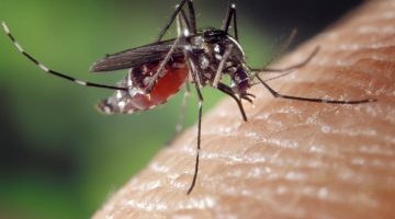 Gene Drive in Mosquitoes to Drive Away Malaria