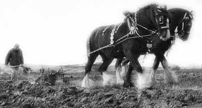 Horses Plowing