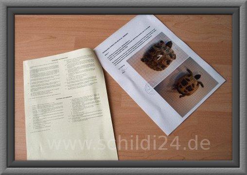 Cities Dokument einer Landschildkröte