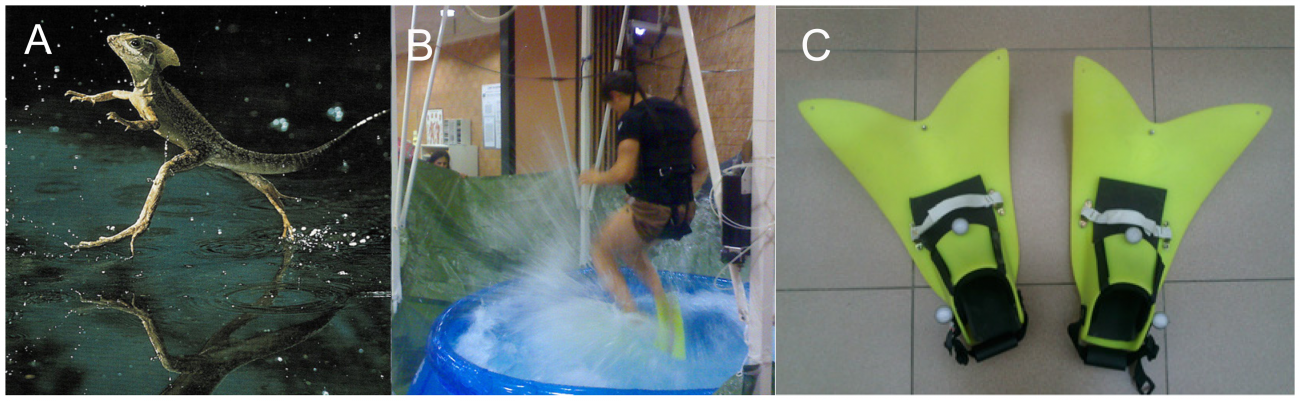 The 2013 Physics Ig Nobel: How to Run on Water
