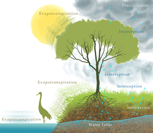 The Watershed Approach