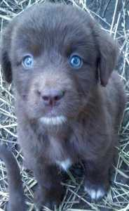 Puppy with nice eyes