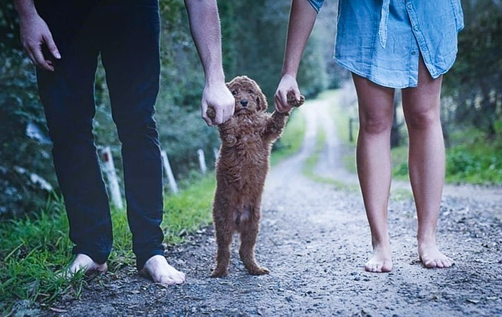 Puppies: Proud Couple Takes Photos With Their New 'Baby'