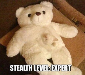 Expert of stealth