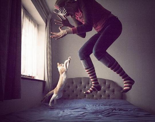 Jumping kitten