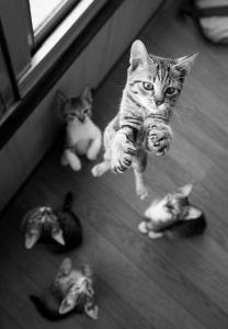 Kittens trampoline
