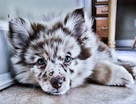 Puppy with unsusual markings