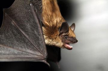 Bats, man!