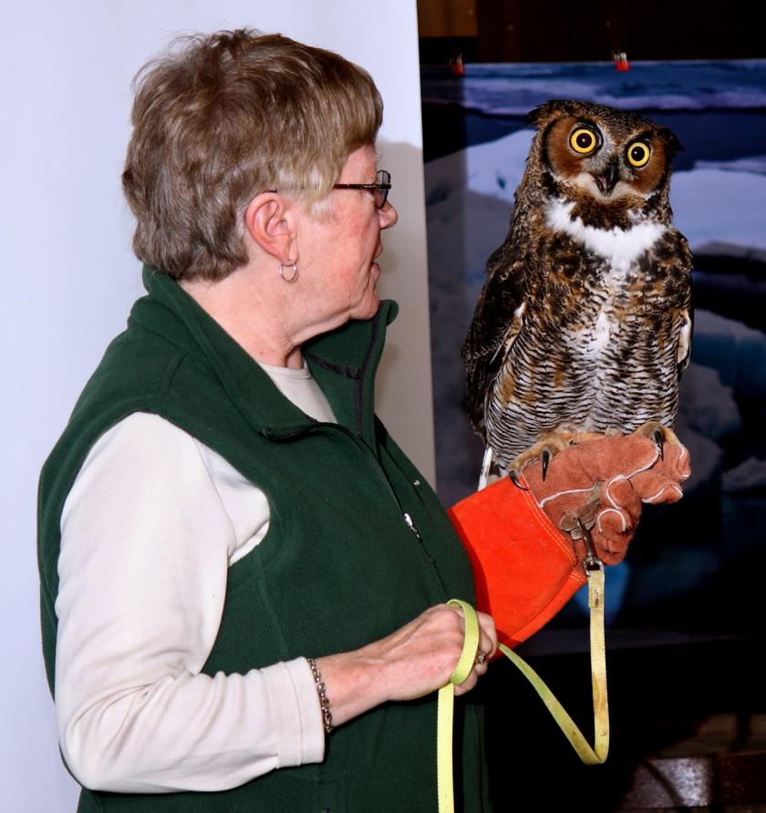 Great Horned Owl 3089