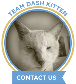 Dash Kitten Contact Us Graphic for the Blog