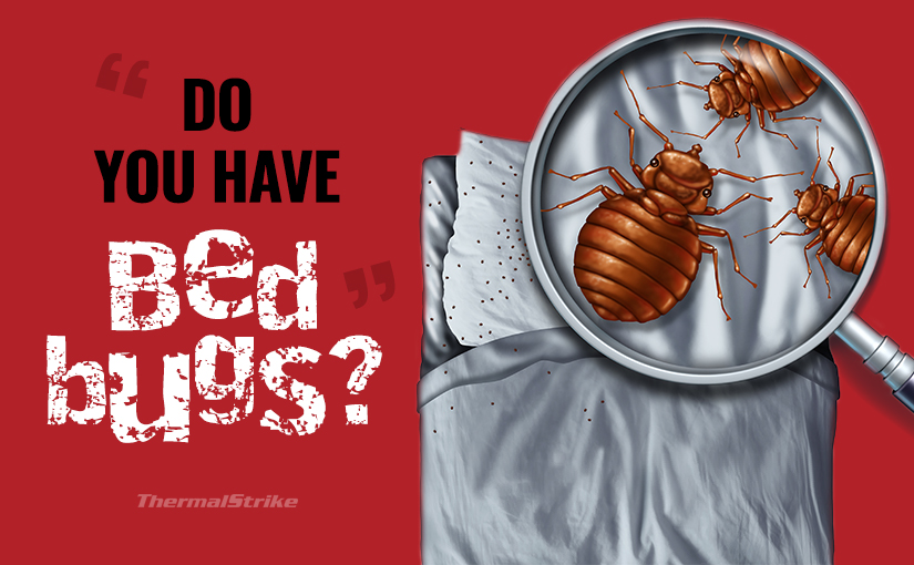 Do you have bed bugs