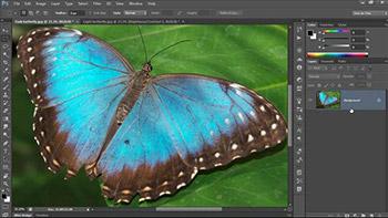 Lynda - Photoshop CC One-on-One Fundamentals - آموزش قدم به قدم فتوشاپ سی سی - سطح مقدماتی