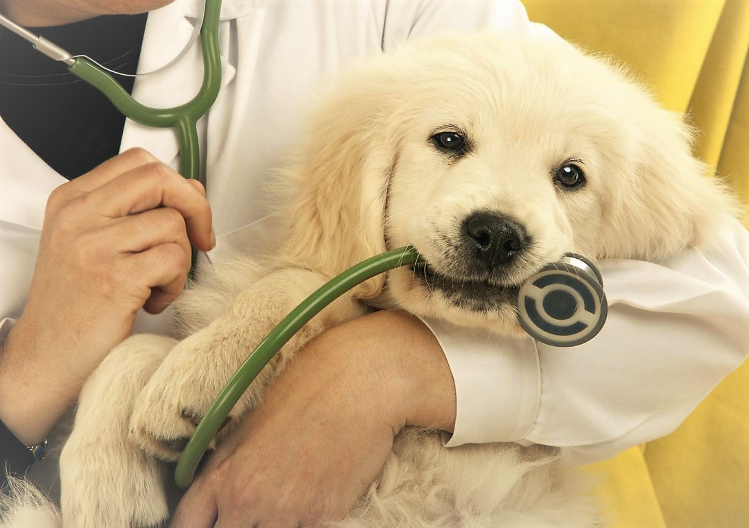 knowing when to call the vet for your cat or dog 5272ef8b53f86
