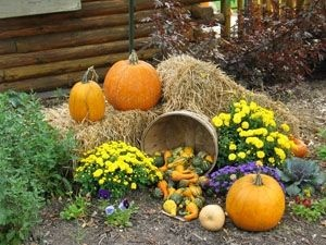 -new/ehow/images/a04/8u/54/decorate-yard-fall-festival-800x800.jpg