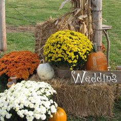 fall decorating with hay bales and mums | Hay bales were set for