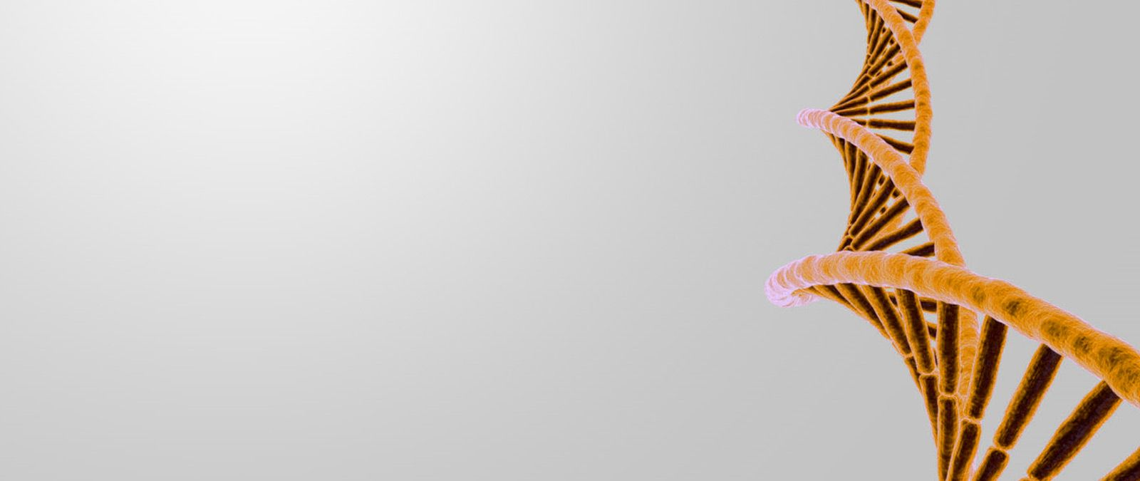 banner_home_4