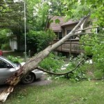 Emergency tree service Old Portsmouth