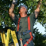 pruning services near Newtown