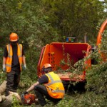 remove dead tree in Portsea