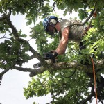 Tree trimming in Artington
