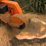 Stump Removal around Banisters Park