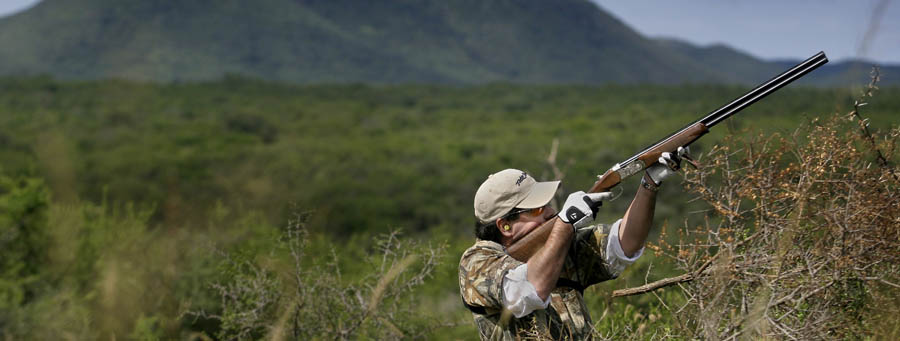 Image result for dove hunting in cordoba argentina