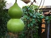 宝葫芦_观赏葫芦籽