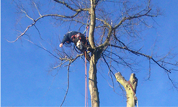 Tree Surgeon near Wideopen