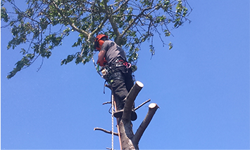 Tree Surgeon around Spring Vale