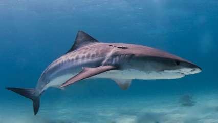 Indian-origin woman killed in shark attack off Costa Rica