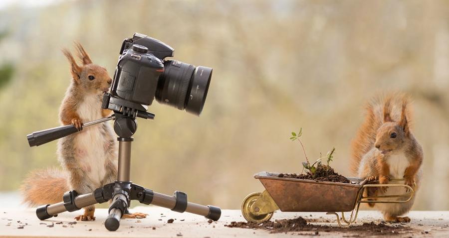 Fotoğrafçı Sincap